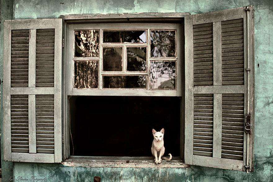 cat-waiting-window-34