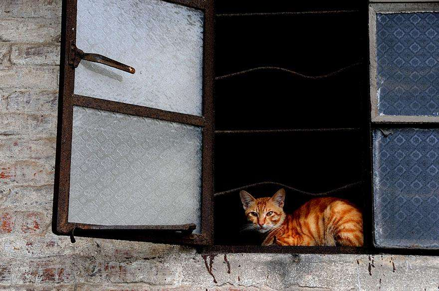 cat-waiting-window-38