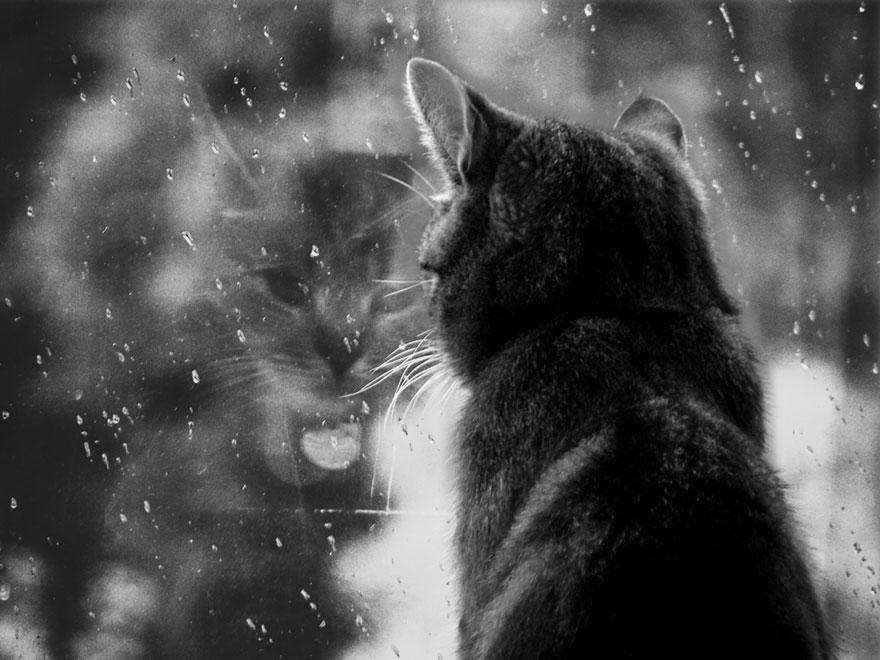 cat-waiting-window-59