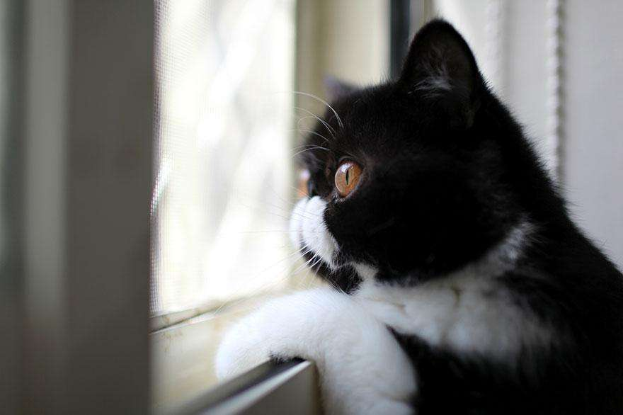 cat-waiting-window-61