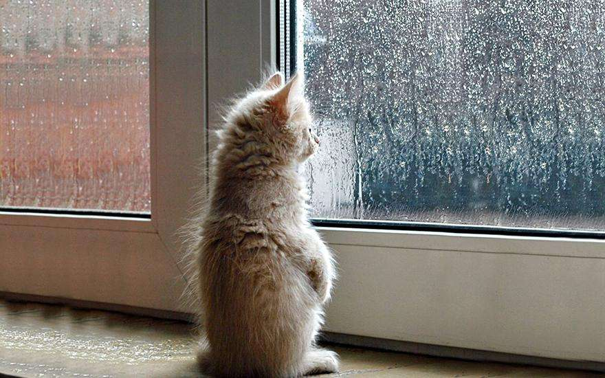 cat-waiting-window-69