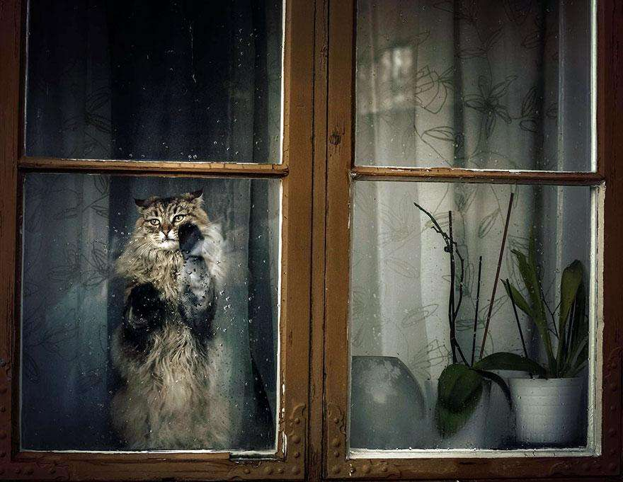 cat-waiting-window-7