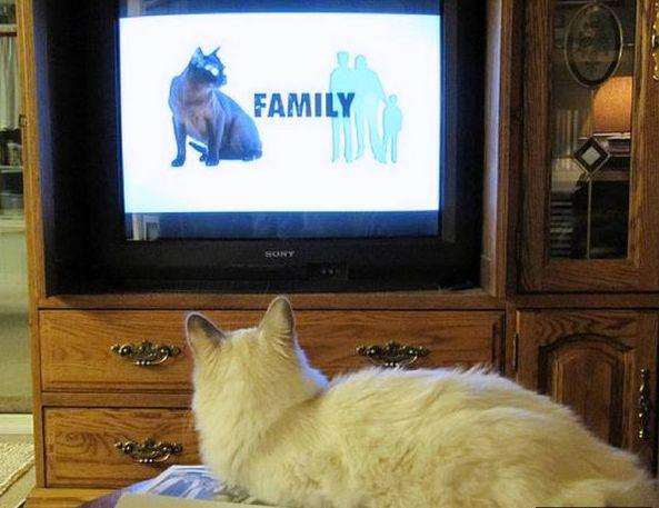 cats_and_tv-_021