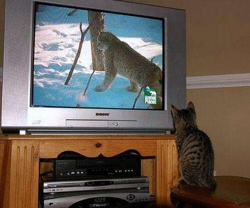 cats_and_tv-_026