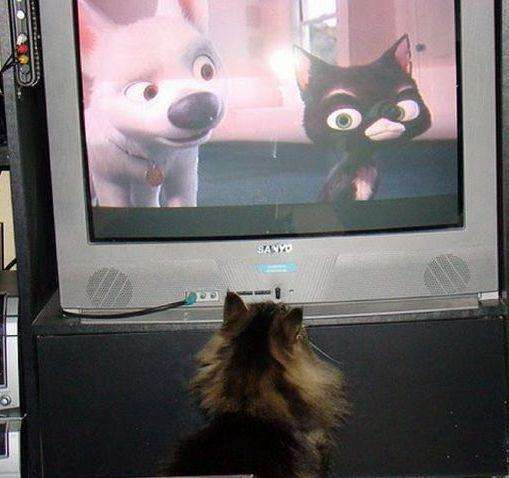 cats_and_tv-_028