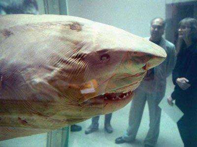 steven-cohen-damien-hirsts-14-foot-shark
