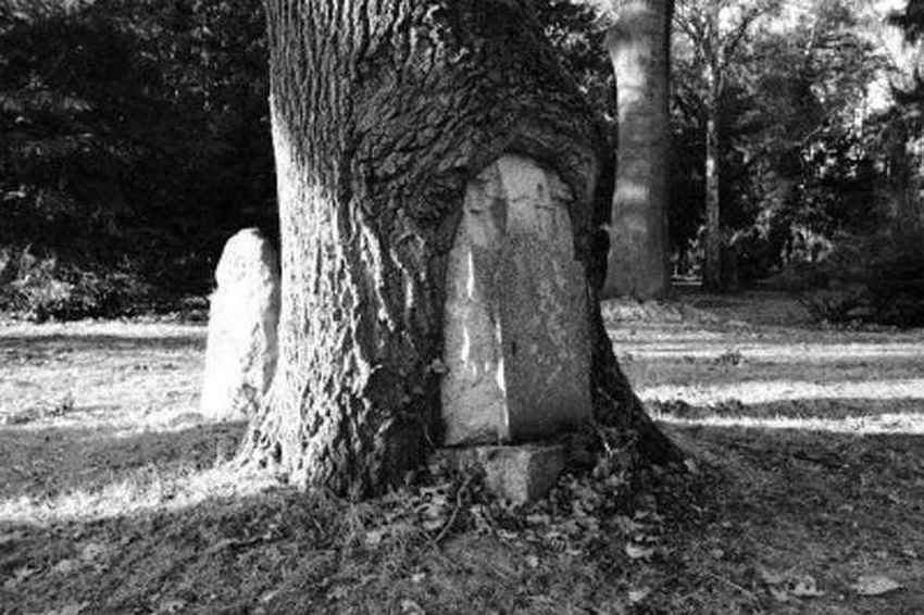 tree-overgrowing-an-old-grave-photo-u1
