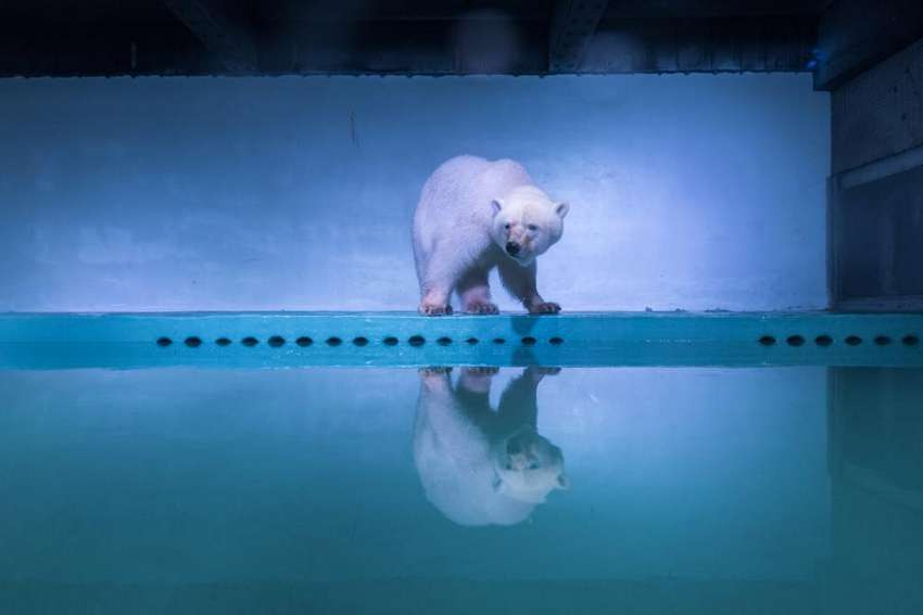 A polar bear is seen at an aquarium in Guangzhou, Guangdong province, China, July 27, 2016. REUTERS/Stringer