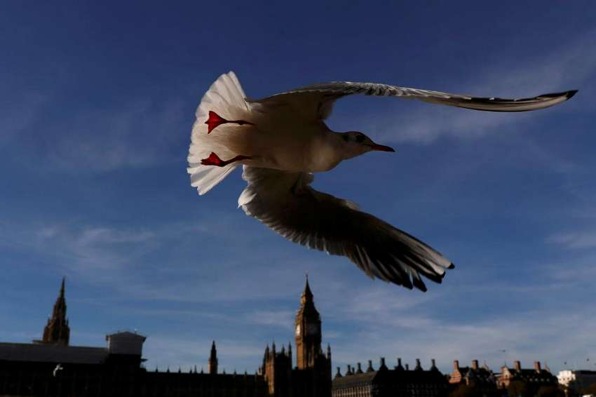 A seagull flies past the Houses of Parliament in central London, Britain November 2, 2016. REUTERS/Stefan Wermuth