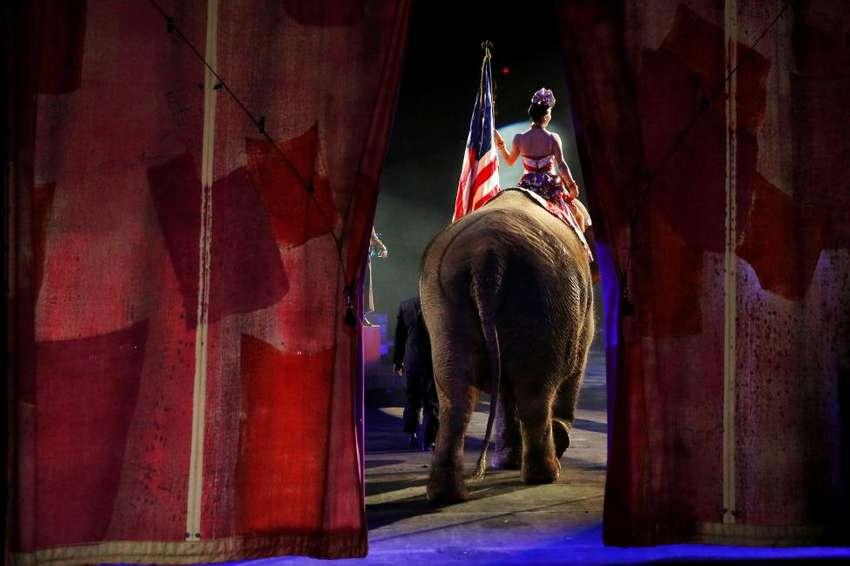 One of Ringling Bros and Barnum & Bailey Circus' performing elephants enters the arena for it's final show in Wilkes-Barre, Pennsylvania, May 1, 2016. REUTERS/Andrew Kelly