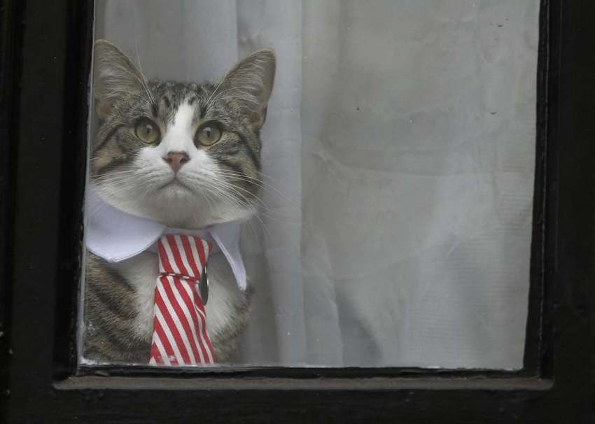 Julian Assange's cat sits at the window of Ecuador's embassy as prosecutor Ingrid Isgren from Sweden interviews Assange in London, Britain November 14, 2016. REUTERS/Peter Nicholls